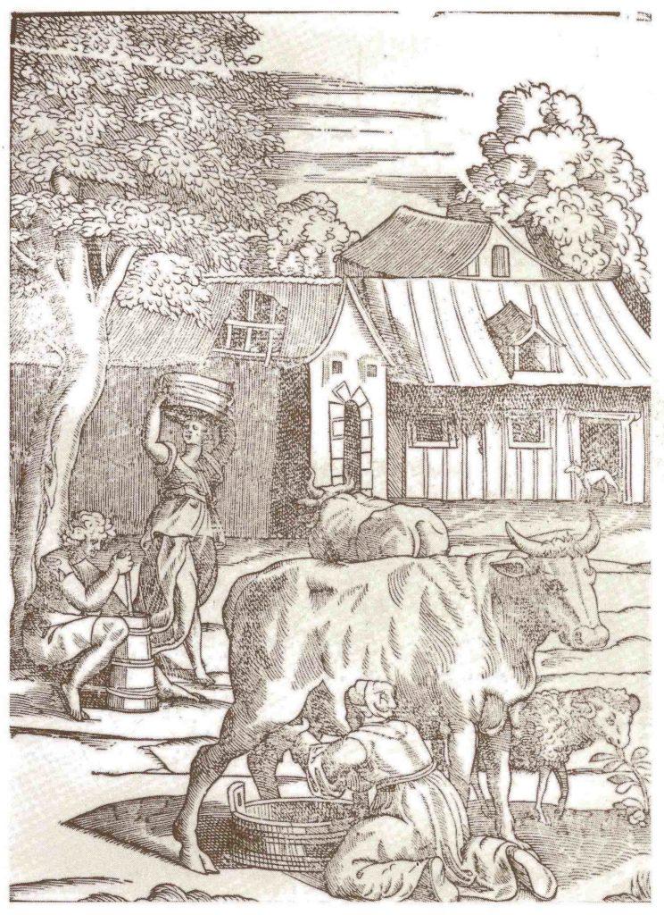 24.02 - Vaccheria